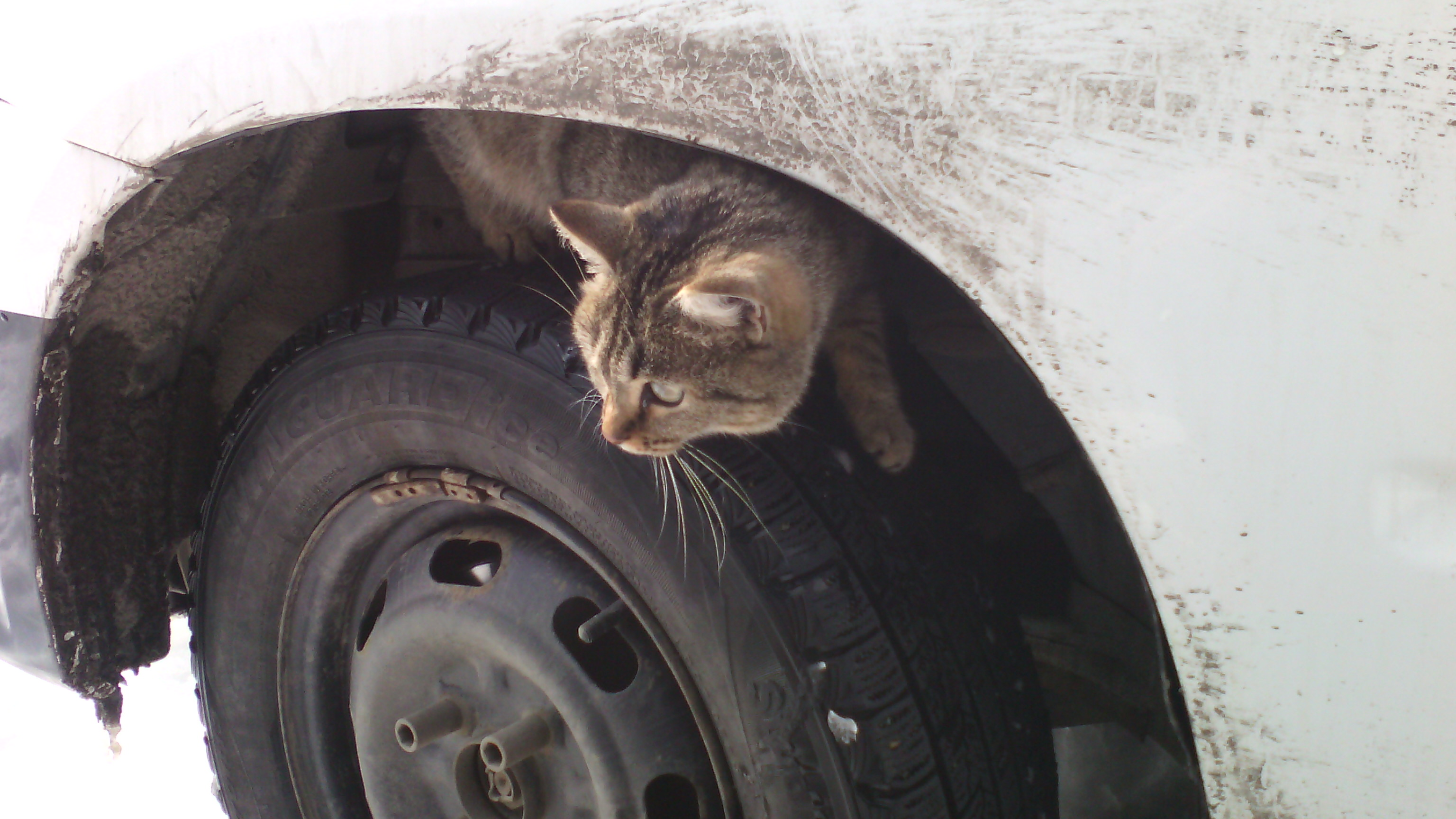 потеряли кота поищите его на моих колесах